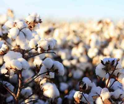 Cotton-the-Fabric-of-Our-Lives-Killa-Industries